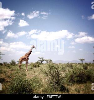 Kenya, Samburu National Park, vue de giraffe Banque D'Images