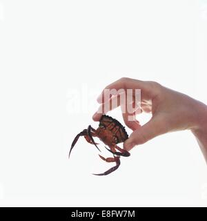 Close up of hand holding small crab Banque D'Images