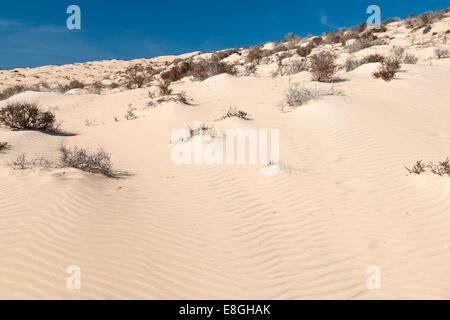 Les dunes de Risco El Paso à Playas de Sotavento, Fuerteventura Banque D'Images