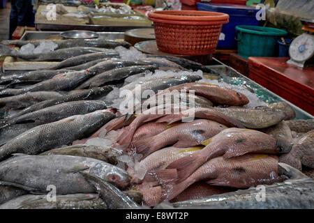 La limite quotidienne de prises de poissons frais à la vente à un décrochage du marché en Thaïlande. Banque D'Images