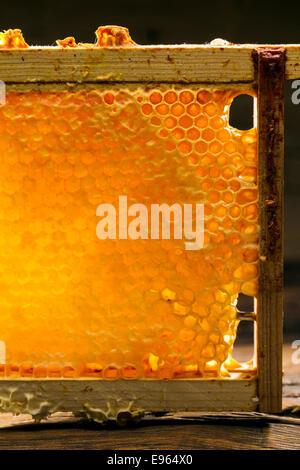 Dans un cadre en bois d'abeille Banque D'Images