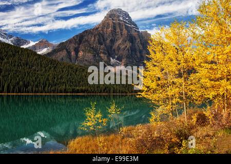 Or automne tremble le long du lac de la sauvagine avec Mt Khéphren en Alberta's Canadian Rockies et le parc national Banque D'Images