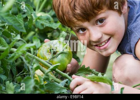 Portrait d'un jeune garçon tenant une tomate cultivés dans son jardin d'accueil Banque D'Images