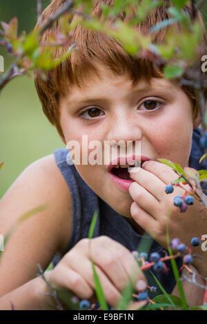 Portrait d'un jeune garçon de manger des bleuets frais du jardin Banque D'Images