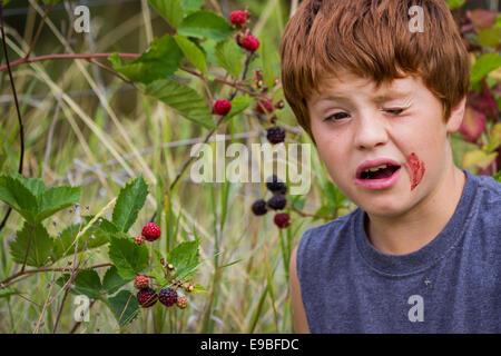 Portrait of a young boy eating mûres fraîches avec une sale face Banque D'Images