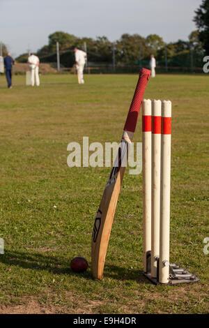 Balle de Cricket avec bat reposant contre les souches