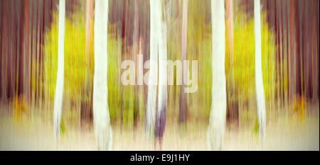 Abstract motion blurred arbres dans une forêt. Banque D'Images