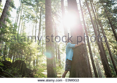 Teenage boy hugging tree in sunny woods Banque D'Images