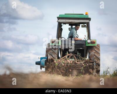 Agriculteur sur le tracteur à la récolte des pommes de terre biologiques Banque D'Images