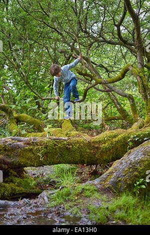 Garçon d'escalade sur les arbres en bois Banque D'Images