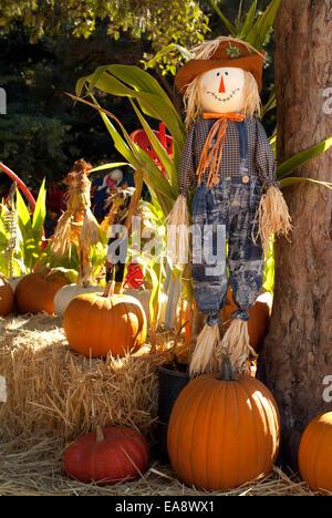 Habillé d'orange citrouille Halloween poupée de paille de maïs heureuse citrouilles jardin sur une scène colorée Banque D'Images
