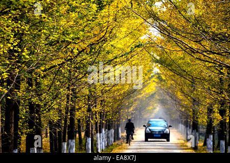 Ji'nan, Chine, la province de Shandong. Nov 9, 2014. Déplacer les véhicules sur une route avec des arbres de ginkgo Banque D'Images