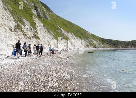 Les gens marcher une longue plage de la crique de Lulworth Cove, sur la côte jurassique du Dorset en site du patrimoine Banque D'Images