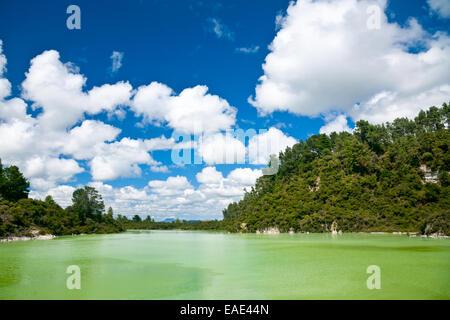 L'eau verte du Lac de Ngakoro au wai-O-Tapu zone géothermique en Nouvelle Zélande Banque D'Images