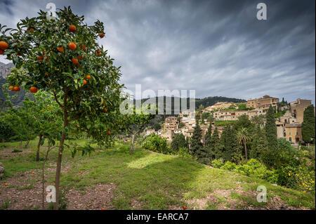Village dans les montagnes et d'orangers, Deia, Majorque, Îles Baléares, Espagne Banque D'Images