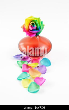 Rose multicolore en vase orange Banque D'Images
