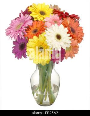 Gerber daisies multicolores dans un bouquet Banque D'Images