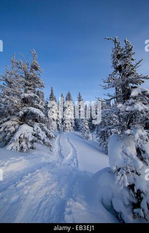 Les voies et les arbres des snowy hillside Banque D'Images