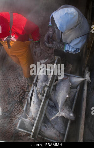 Travailleurs d'usine de transformation de fruits de mer travaillant dans la cale à poisson de bateau de pêche commercial, Banque D'Images