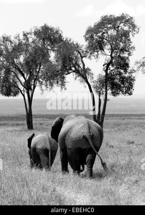 L'éléphant retour à l'Mara des marais Banque D'Images
