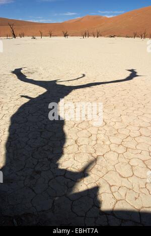 Sossusvlei est un sel et de l'argile pan entouré de hautes dunes rouges situé dans la partie sud du désert du Namib Banque D'Images