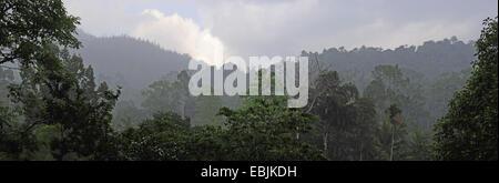 Vue de la forêt de Sinharaja dans la matinée, le Sri Lanka, Sinharaja Forest National Park