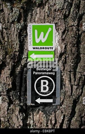 Randonnées signes sur tronc d'arbre, forêt, route de Sauerland Allemagne Banque D'Images