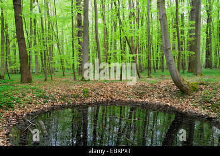 Forêt de printemps en miroir dans un étang, Allemagne