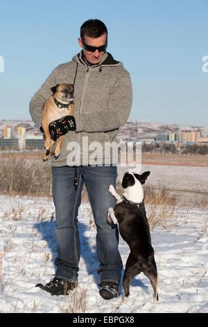 Homme avec ses chiens Boston Terrier et Bugg (croisement entre Boston Terrier et Pug) dans le parc de la ville Banque D'Images