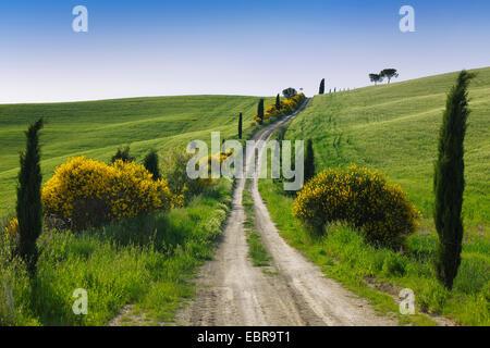 Chemin de terre avec des cyprès au printemps, San Quirico d'Orcia, Val d'Orcia, Italie, Toscane Banque D'Images