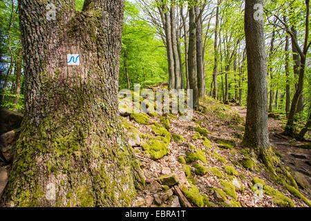 Inscrivez-Neckarsteig randonnée sur un arbre à côté d'un sentier de randonnée, l'Allemagne, Bade-Wurtemberg, Neckarsteig, Banque D'Images