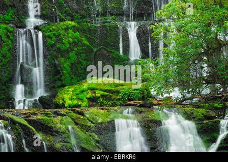 Purakaunui Falls, Nouvelle-Zélande, Sud de l'île, le Parc Forestier de Catlins