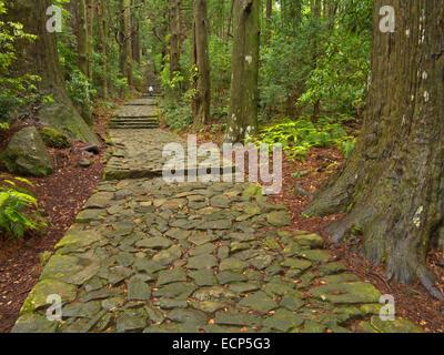 Le Daimonzaka étapes à Kumano Nachi Taisha Grand culte, sur les chemins de pèlerinage de Kumano Kodo, sentier péninsule Kii, Wakayama, Japon