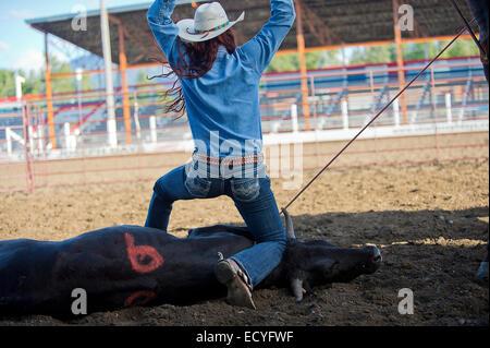 Cowgirl en bovins de race blanche de liage sur Rodeo Ranch