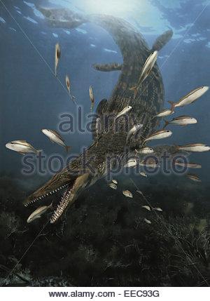 Un Mosasaurus rss sur un petit banc de poissons dans les mers du Crétacé. Banque D'Images