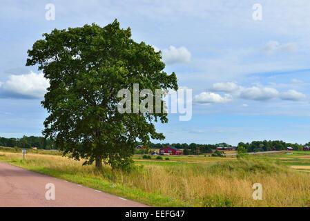 Paysage rural avec des routes de campagne, entre les champs et Lone Tree Banque D'Images
