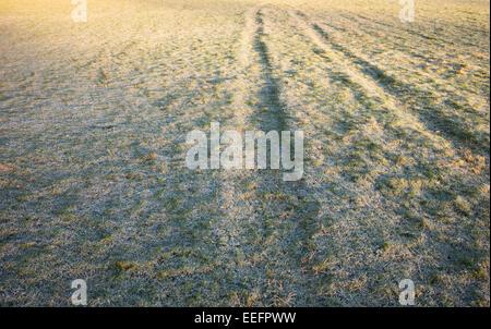 Les chenilles du tracteur dans un champ d'herbe glaciale en hiver. UK Banque D'Images