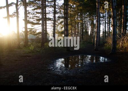 La lumière du soleil en hiver bois Banque D'Images