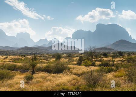 Paysage désertique, parc national de Big Bend, Texas, États-Unis