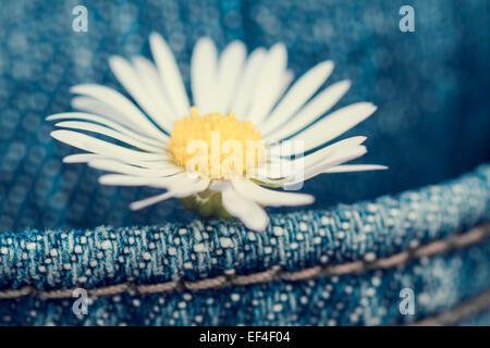 Concept, daisy fleur dans une poche de pantalon jean Banque D'Images