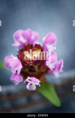 Concept, fleur dans une poche de pantalon jean Banque D'Images
