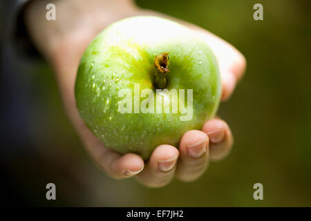 Hand holding fresh green apple Banque D'Images
