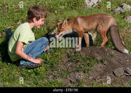 Garçon assis à côté d'un renard roux (Vulpes vulpes) à sa tanière, Autriche Banque D'Images