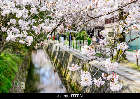 Kyoto, Japon à Promenade du Philosophe dans le Printemps. Banque D'Images