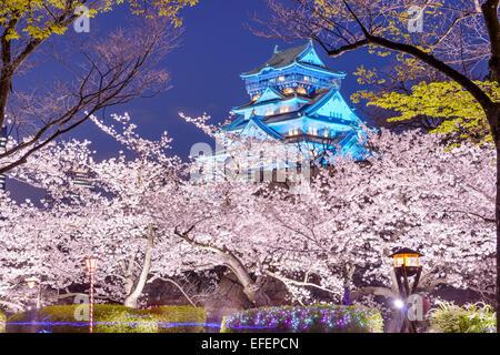 Osaka, Japon à Osaka, château avec des fleurs de cerisiers. Banque D'Images