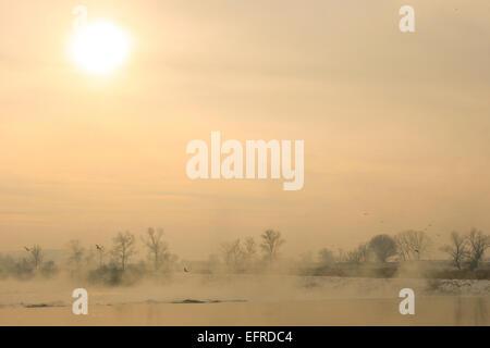 Coucher du soleil avec vol de mouettes au-dessus de l'eau près de la rive couverte de neige de la rivière Sava à Banque D'Images
