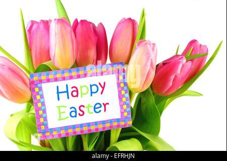 Carte Joyeuses Pâques chez les tulipes roses sur fond blanc Banque D'Images