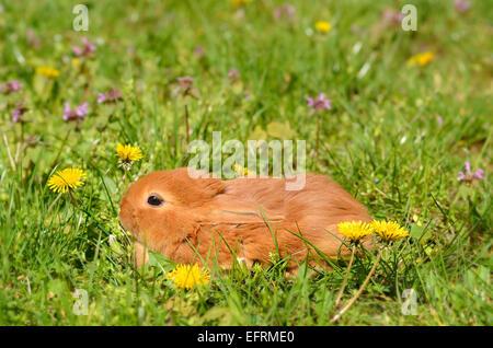Photo Gros plan d'un petit lapin sur l'herbe verte Banque D'Images