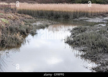 À marée basse, dans un fossé dans l'eau de mer/ partie de marais saumâtres Vange, Essex avec un ciel reflété et Banque D'Images