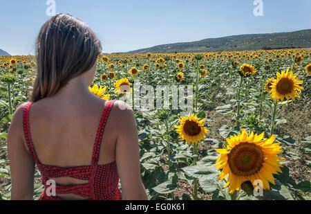 Vue arrière d'une femme debout dans un champ de tournesol Banque D'Images